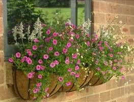 Graham shows you how to turn a bare window into a beautiful display using three distinct styles of planting. This is a great way to easily and inexpensively create a colourful focal point for a drab wasted space!