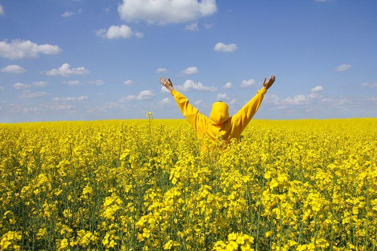 Yellow summer by C_MC_FL_ Photo 156570021 500px