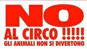 Diciamo NO alla sofferenza degli animali nel circo! Andare allo zoo non è istruttivo,peggio ancora andare in un circo con animali, visto che l'unica cosa che lì si può vedere è quella di ignorare la sofferenza degli animali e divertirsi mentre loro so #circo #sofferenza #animali #prigione