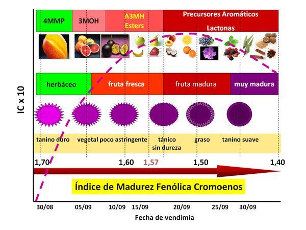 Color probable del vino. Análisis color uva - Consultoría asesoría en enología Bioenos S.L.