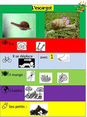 Les Clés de la Maternelle - Découvrir le monde avec méthode - Un escargot à l'école