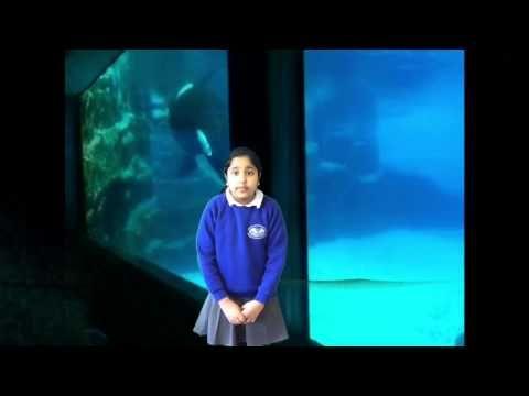 10 Children Share an Emotional Anti-Captivity Message at European Parliament (VIDEO) | One Green Planet