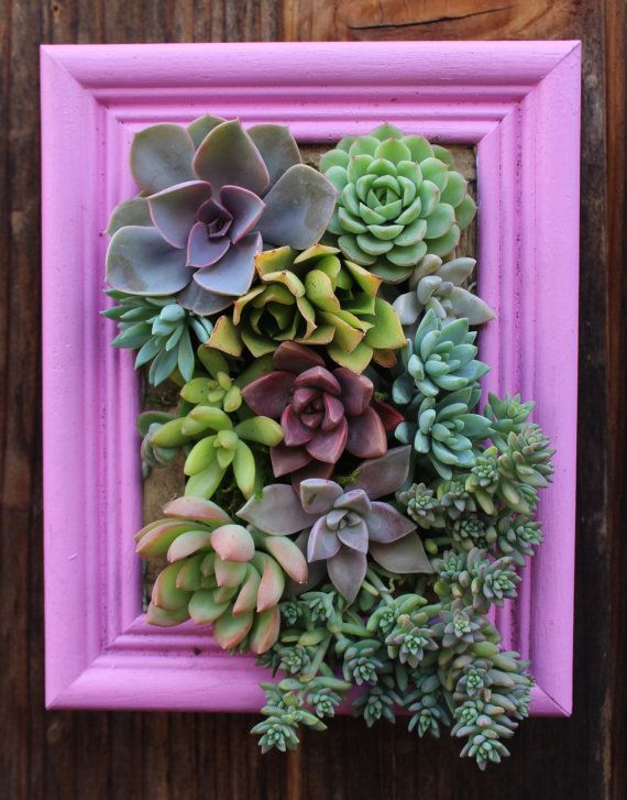 Ready to ship Picture Framed Vertical Succulent Garden Planter