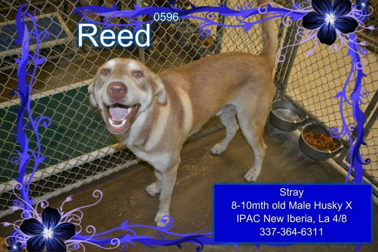 Desperate Dogs Kennel In Nm