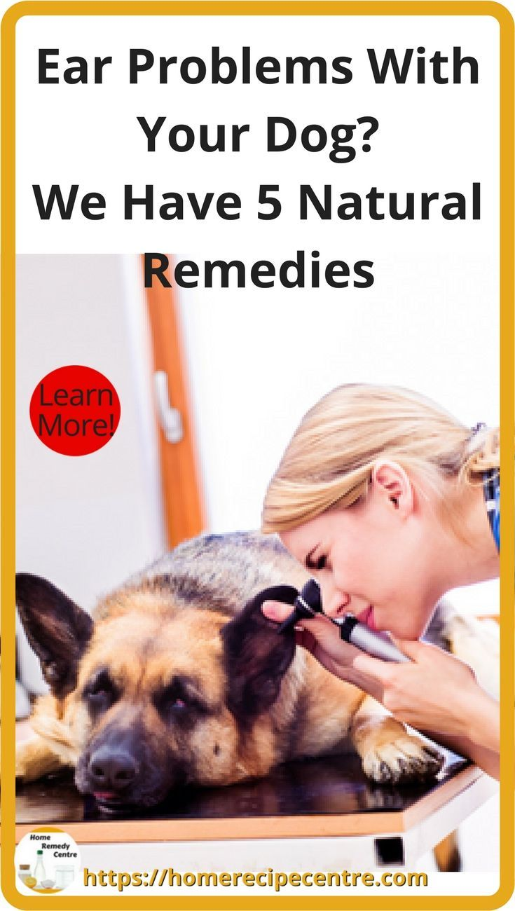 5 Home remedies For Your Dog's Ear Infection | Dog Health, First Aid