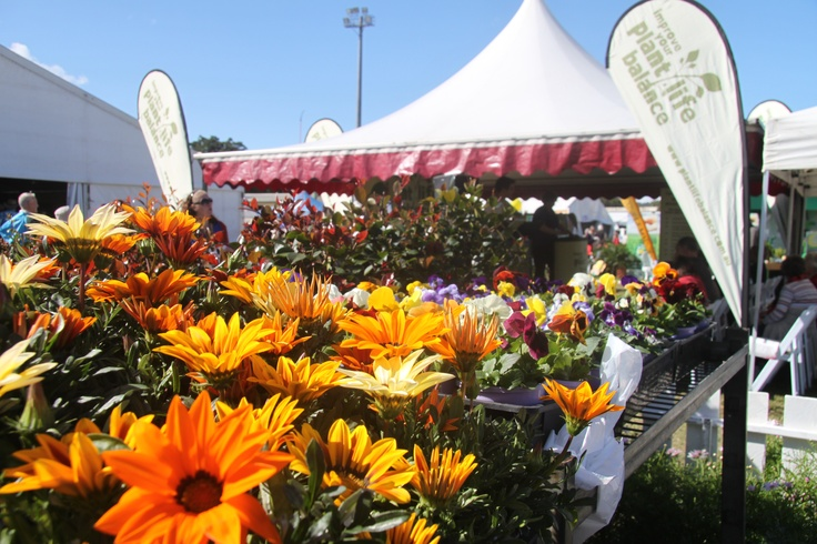 There are so many beautiful plants to choose from at the QLD Garden Expo