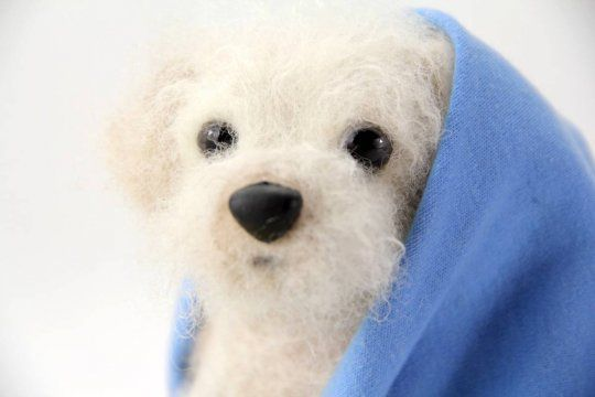 Benji. A one-of-a-kind handmade toy poodle rescue from shelterpups.com.