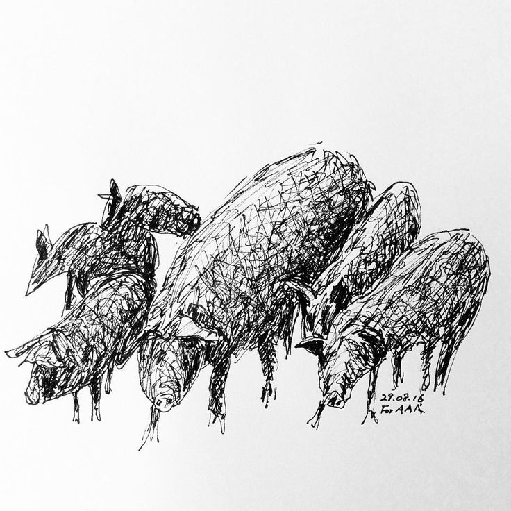 Black horse, black cow, black rabbit. But in Jeju Island there are black pigs. They are considered Natural Monuments and protected by the Korean government. #drawing  #signpen #horses  #cow #rabbit  #jejuisland  #pig # Cavalo preto, tourp preto, coelho preto. Mas na Ilha de Jeju vivem porcos pretos desde antes. Eles estão sendo pretegidos por terem sido denominados monumentos do milênio. 까만 말, 까만 소, 까만 토끼. 그런데 제주도에는 옛부터 새까만 돼지가 있단다. 천연기념물로 정해서 보호하고 있다는 것도 알아두자.