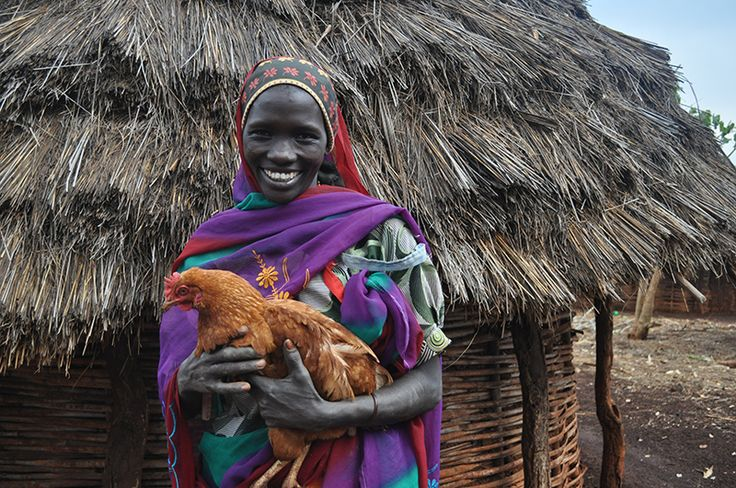 Hatch a new future for a vulnerable family in #Ethiopia! Your gift will provide a #rural Ethiopian family with 10 #chicks and the support needed to rear #poultry as a source of food and income. #canadiangiftguide #chickens #donate #christmas2014