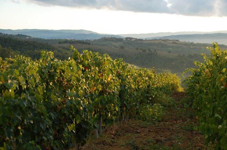 The Wine | La Segreta
