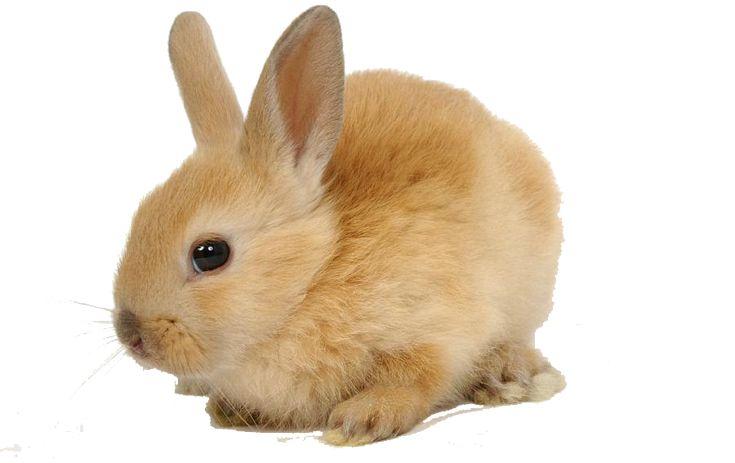 comprar-venta-conejo-cobaya-jaula-comida-conejo-hamster-huron-chinchilla-ardilla-petauro-accesorios-juguetes
