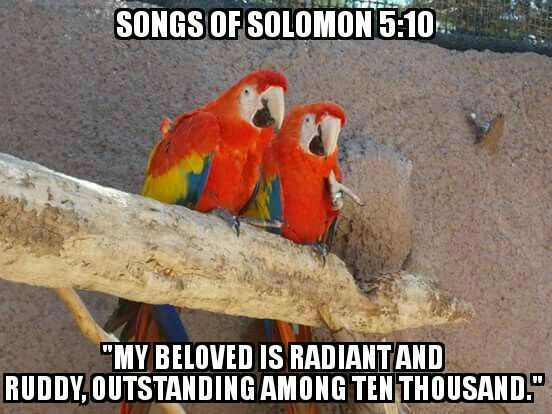"Day 38: March 18th - 'Beloved'  ""My beloved is radiant and ruddy, outstanding among ten thousand."" Songs of Solomon 5:10  #Rethinkchurch #Rethinkphoto"
