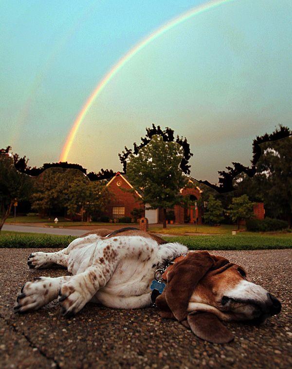 Basset Hound chillin' under a rainbow! Love it!
