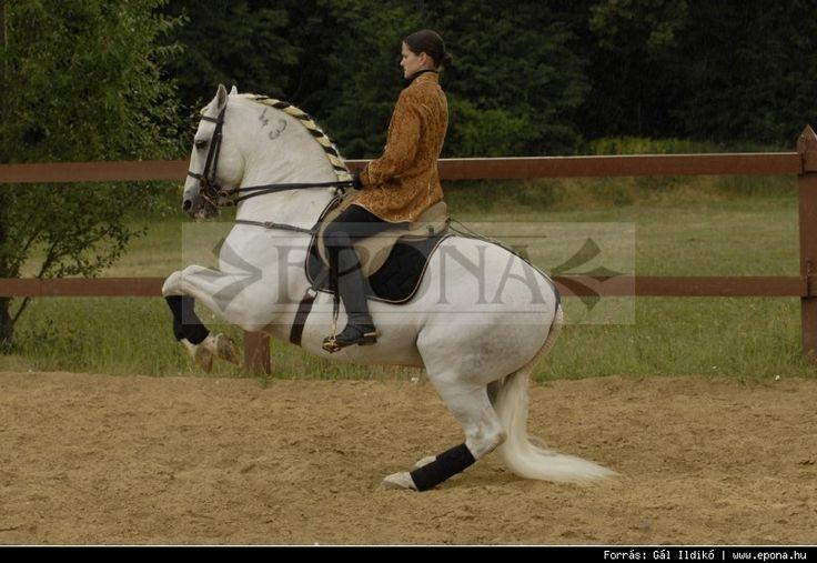 Spanyol lófajta népszerűsítése, tenyésztése és képzése a fő tevékenységünk.  http://www.epona.hu/?pg=epona#tag_1