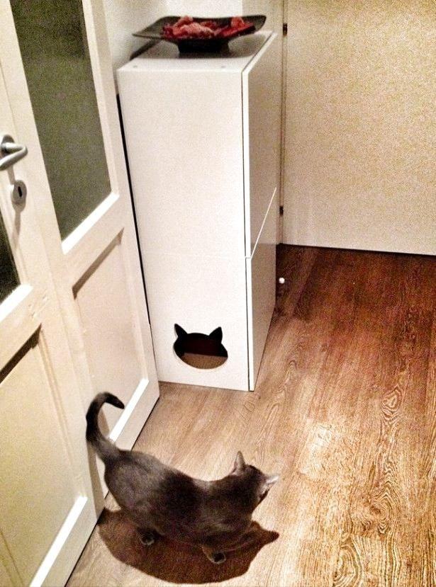 Фото из статьи: Куда спрятать кошачий туалет: дизайнерский подход