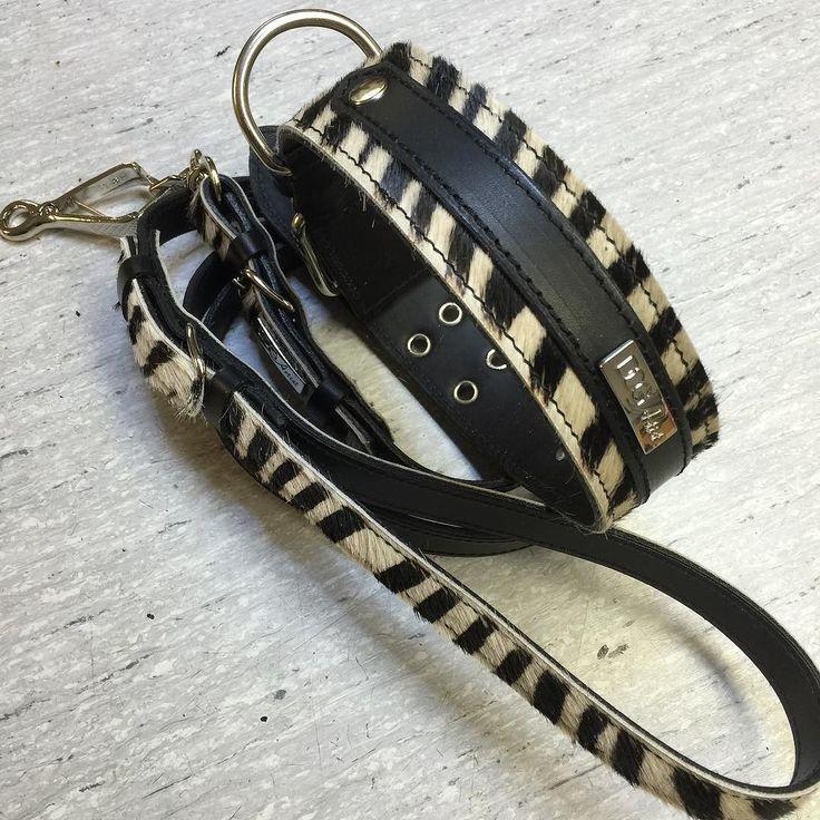 Halsband och koppel i Zebra / Läder. #hellnersläderverkstad #handmade #landskrona #läderhantverk #dogcollar #dogleash by mikael_hellner