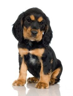Puppy's first night home. How to help stop your puppy from crying and get him to sleep.    This is a second helpful link:    http://www.ehow.com/how_5791658_stop-puppy-crying-barking-crate.html