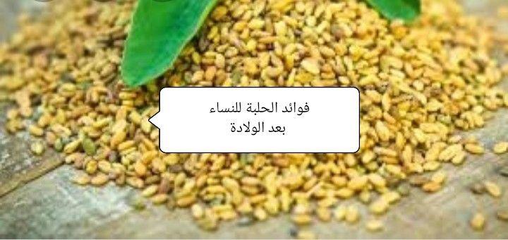 فوائد الحلبة للنساء بعد الولادة How To Dry Basil Herbs Basil