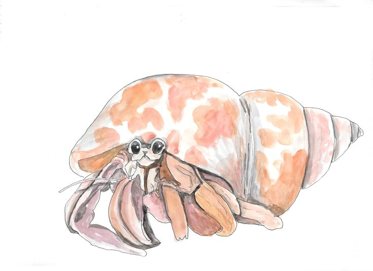 Hermit Crab hand drawn watercolor illustration by RobertaTomei on Etsy