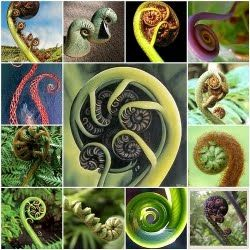 Koru - The unfolding spiral tipped shoots of the New Zealand silver fern plant become new fern fronds. Thus the reference to new life or a new start. Especially in Maori culture, these Koru have a strong symbolical meaning.