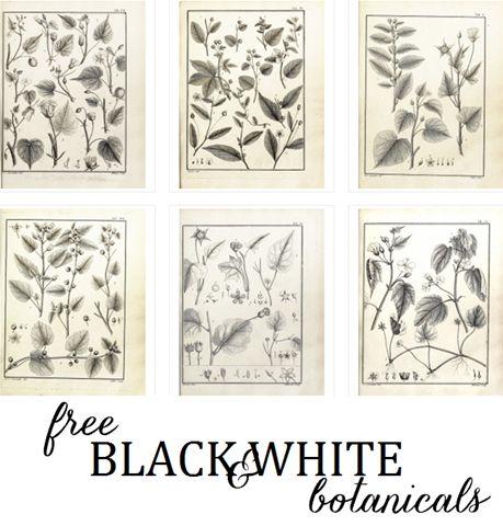 free black and whtie botanical artwork