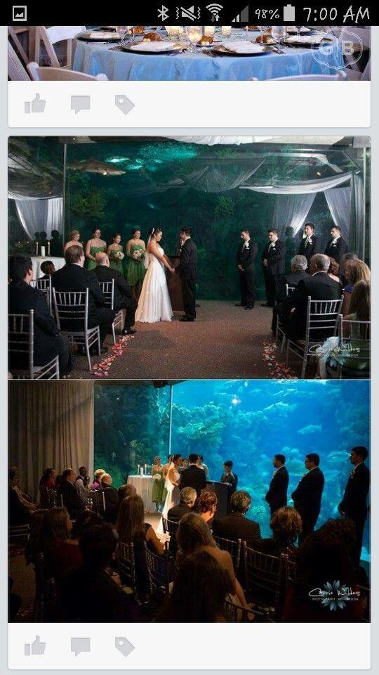 Aquarium venue for wedding 13 best Kiss