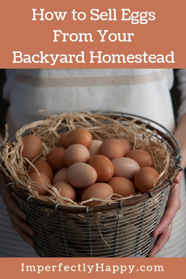 Selling Eggs From Your Backyard Homestead The Imperfectly Happy Home Selling Eggs Homesteading Diy Chicken Coop