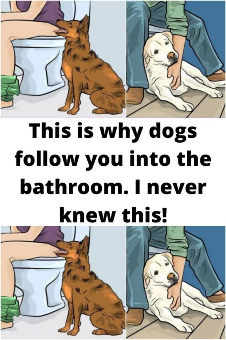 This is why dogs follow you into the bathroom. I never