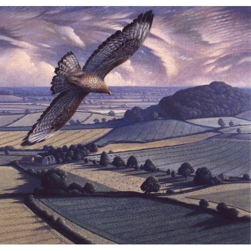 Buzzard in Flight ~ James Lynch