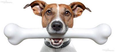Bio Bloggando: La Dieta Naturale per il tuo Cane