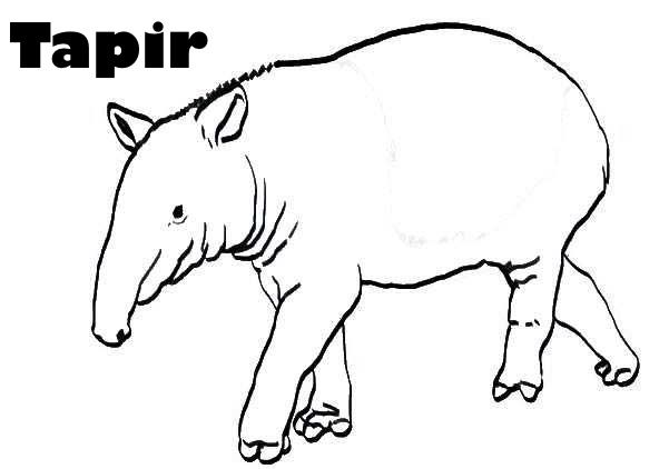 Tapir Para Colorear Buscar Con Google Moose Art Animals Art