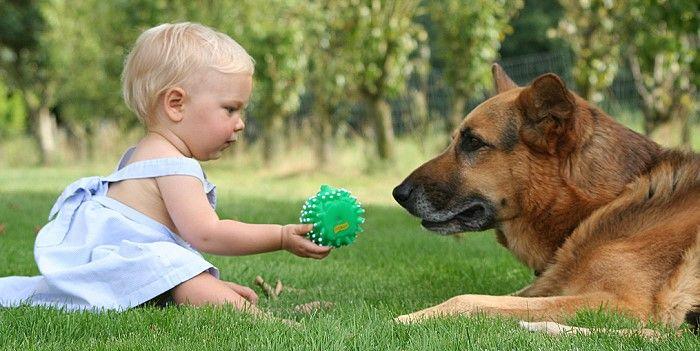 Razas De Perros Para Niños Y Guardian. Los perros siempre van a ser parte importante en nuestra familia, sea cual sea su raza y tamaño, además si los entrenas correctamente llegarán hacer muy educados y no tendrás problemas de tenerlo en casa ni con tus vecinos. Muchos de los canes son ideales para un niño, tener un animalito de estos en casa no solo te traerán alegría si no que pueden jugar y hacer amistan con tus hijos, tu hijo....  Razas De Perros Para Niños Y Guardian. Para ver el…