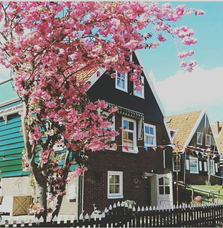 Spring is here and we love it 💖💖 #Marken #holland