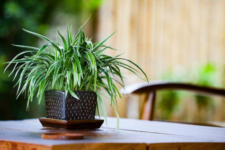 Le 15 piante da interno super-resistenti! Prima Parte ...