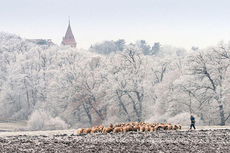 Morning silence....Transylvania, Romania by Ciprian Cenan on 500px, www.romaniasfriends.com