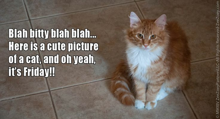 Happy Friday! | Cats!! | Pinterest