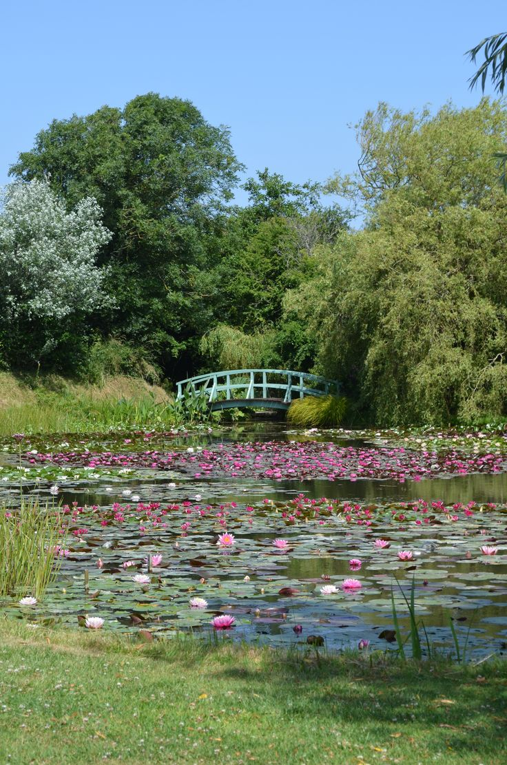Bennetts Water Gardens Visitor Attraction Home To The Largest National Plant Collection Of Lilies