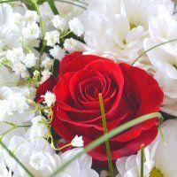 Надёжная доставка цветов, заказ цветов, доставка букетов по Москве, России и миру - Флора2000.ру