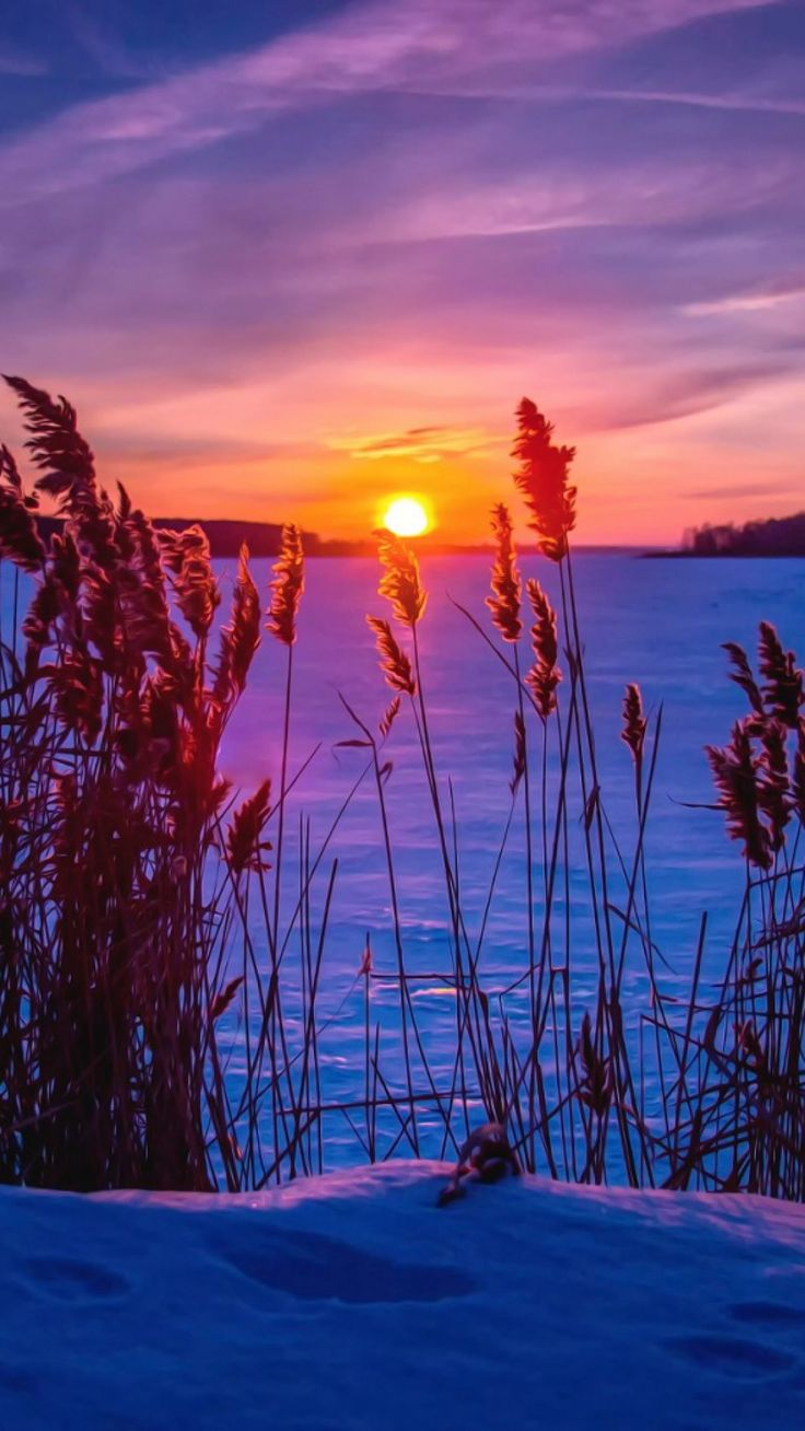 winter, sunset, snow, grass