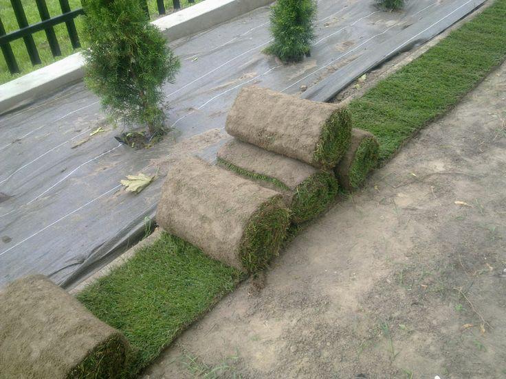 Rozwijanie trawy z rolki