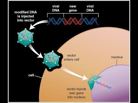history of gene therapy pdf