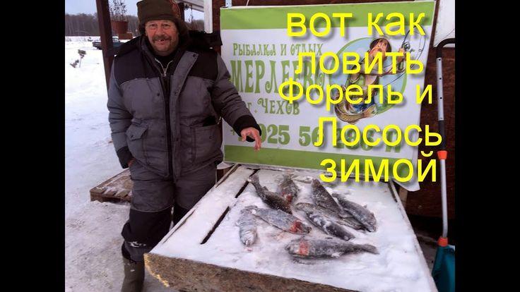 fishing, Рыбалка, зимой, форель, секреты ловли