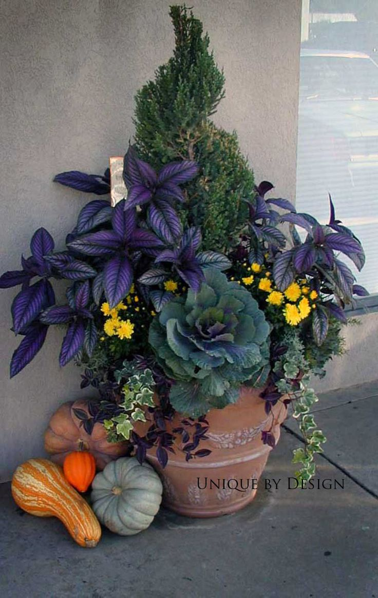 Super easy fall combo... Persian Sheild, ornamental cabbage, mums and ivy!