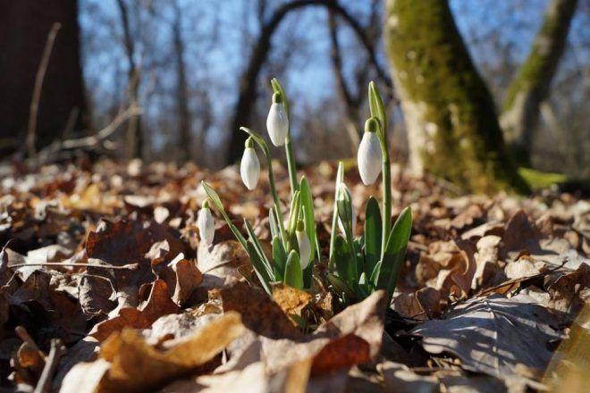 Itt a Tavasz, olvad a jégszelfi