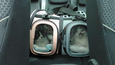 Borsa Trasportino per Gatti #trasportino #borsa #tracolla #grigio #rosa http://www.principini.it/prodotti/gatti/borsa-trasportino-per-gatti