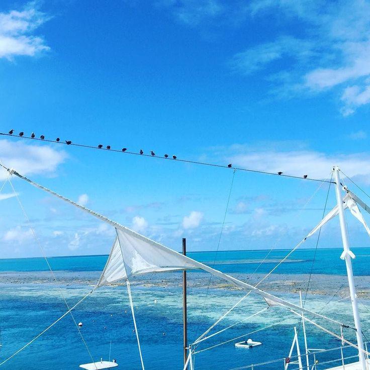 Great Barrier Reef  #greatbarrierreef by clair_fisher http://ift.tt/1UokkV2