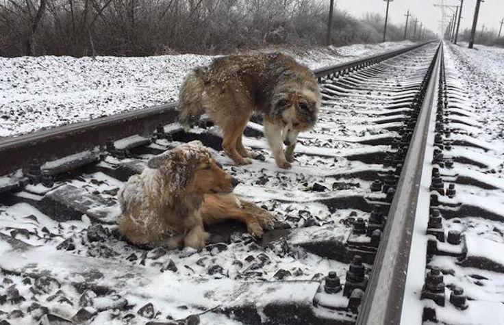 Devoted Dog Spends Days Guarding Injured Friend On Train Tracks http://ift.tt/2ixEWyl