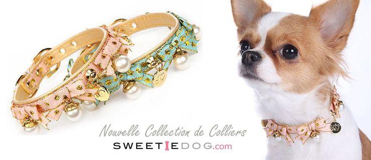collier chien : La nouvelle collection de magnifiques colliers pour chiens est arrivée !! http://www.sweetiedog.com/boutique/16-colliers-chien mannequin chihuahua