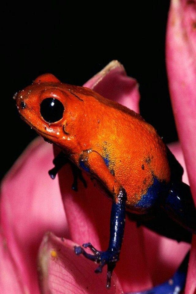 V Frog Kpm Pin by Sarah Lo...