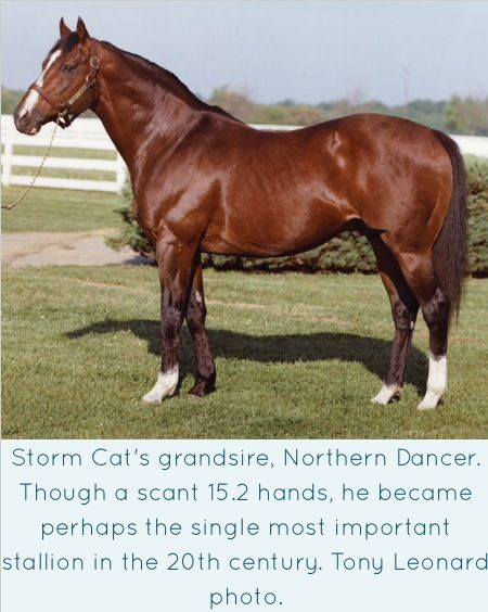 I owned a Great Grandson of Northern Dancer - Chippendale Dancer he was built very similar to ND and had those tiny little ears. He was Royalty in my barn.
